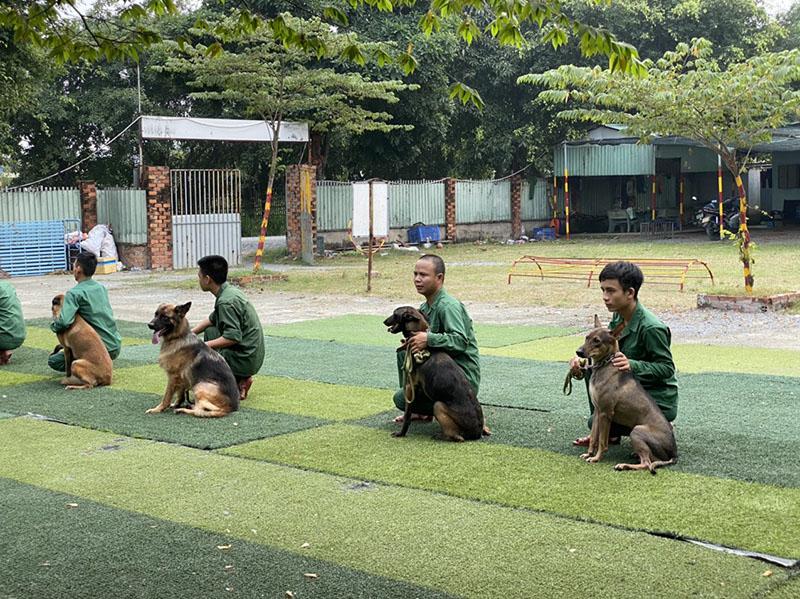 Địa chỉ huấn luyện chó chuyên nghiệp uy tín tại Tphcm